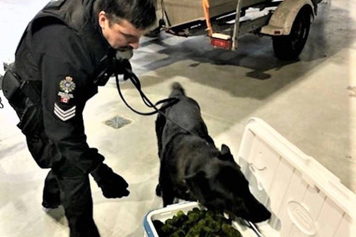 Conservation officers use dogs trained to detect invasive zebra mussels on boats, and the skill comes in handy to check decorative aquarium moss balls that may be contaminated. (B.C. Conservation Officer Service)