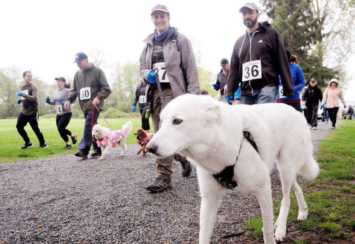 Langley Animal Protection Society's Furry Tail Foot Race is normally in person at Derby Reach, but COVID-19 has changed the way it will occur this year. (Aldergrove Star files)