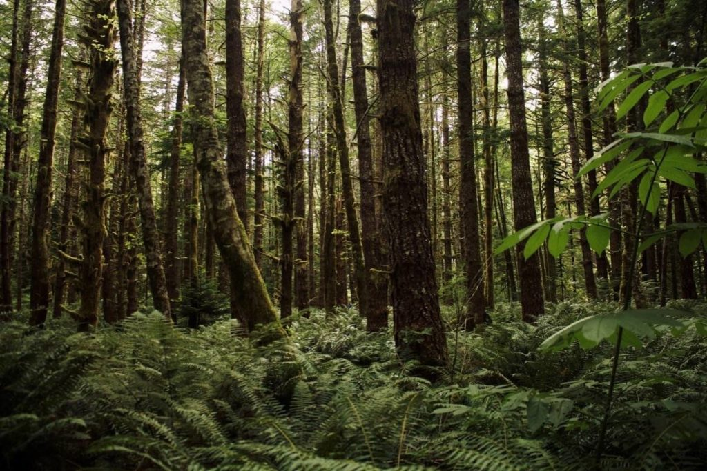 Each year, less than one per cent of the area designated for sustainable timber harvesting by B.C.'s independent chief forester is harvested. (B.C. government photo)