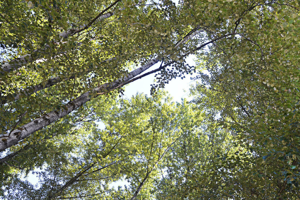 Langley Township council passed a tree protection bylaw in 2019, but one resident says the municipality does not do enough to preserve valuable trees. (Black Press Media)