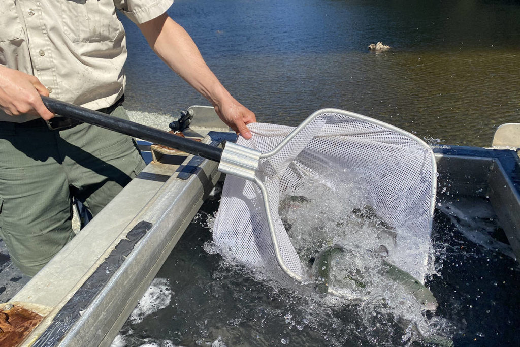 VIDEO: B.C. lake stocked with hatchery trout to delight of a seniors fishing club - Langley Advance Times