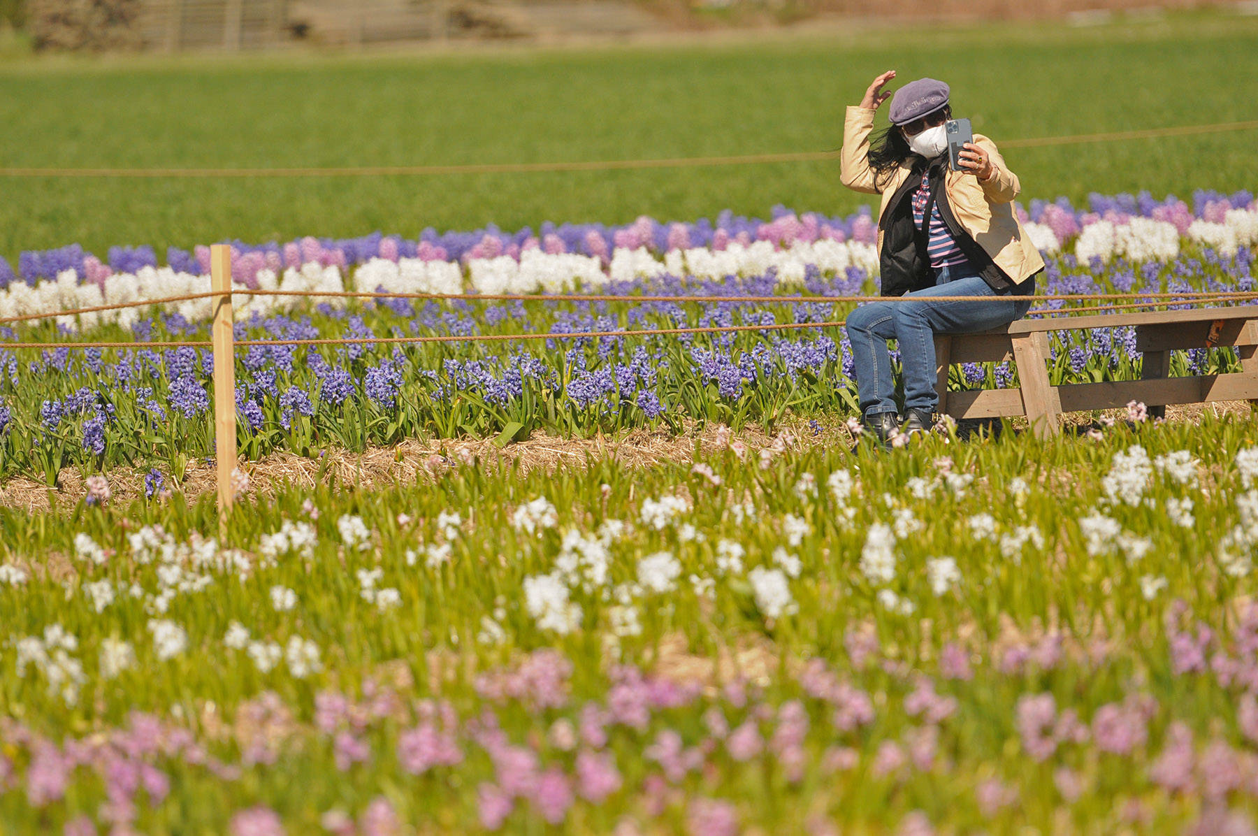 A woman adjusts her hat while taking a photo in the fields of hyacinths at the Chilliwack Tulips attraction on April 13, 2021. (Jenna Hauck/ Chilliwack Progress)