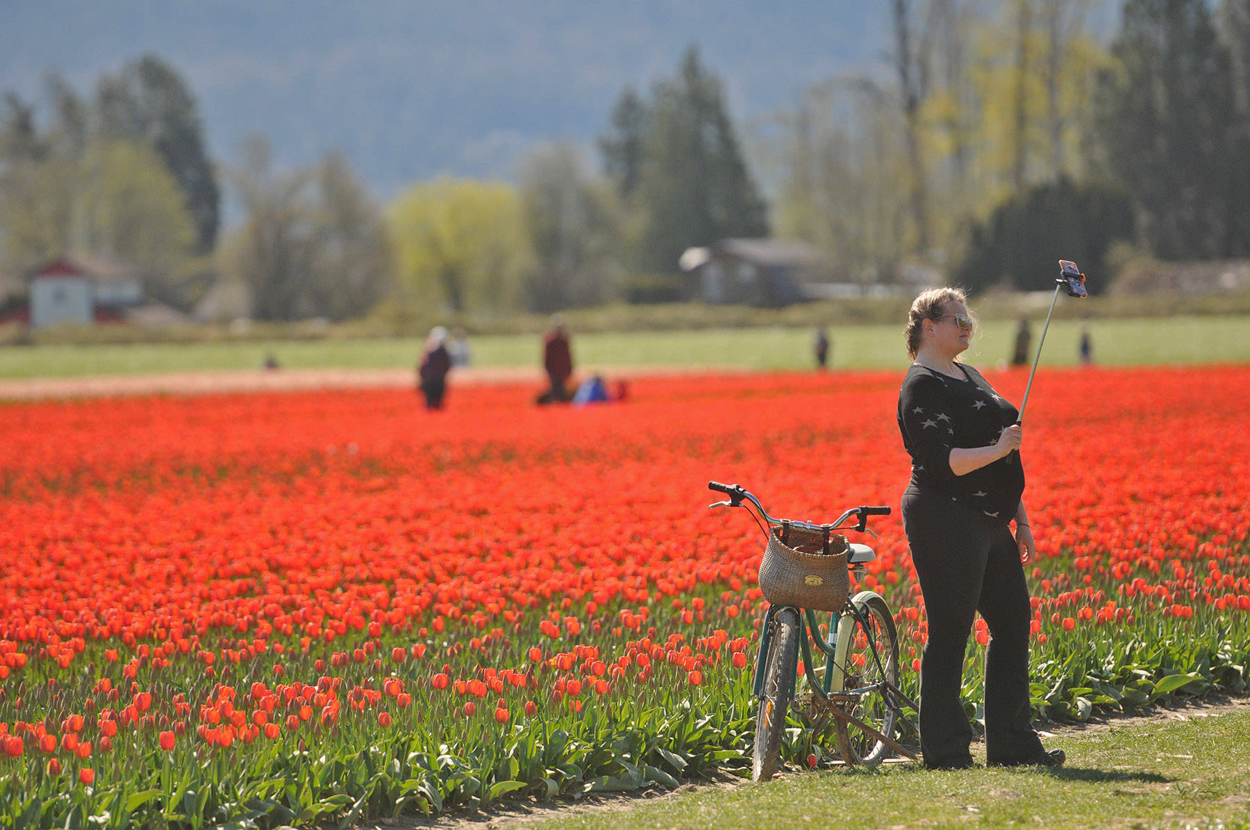 A woman snaps a selfie at the Chilliwack Tulips attraction on April 13, 2021. (Jenna Hauck/ Chilliwack Progress)