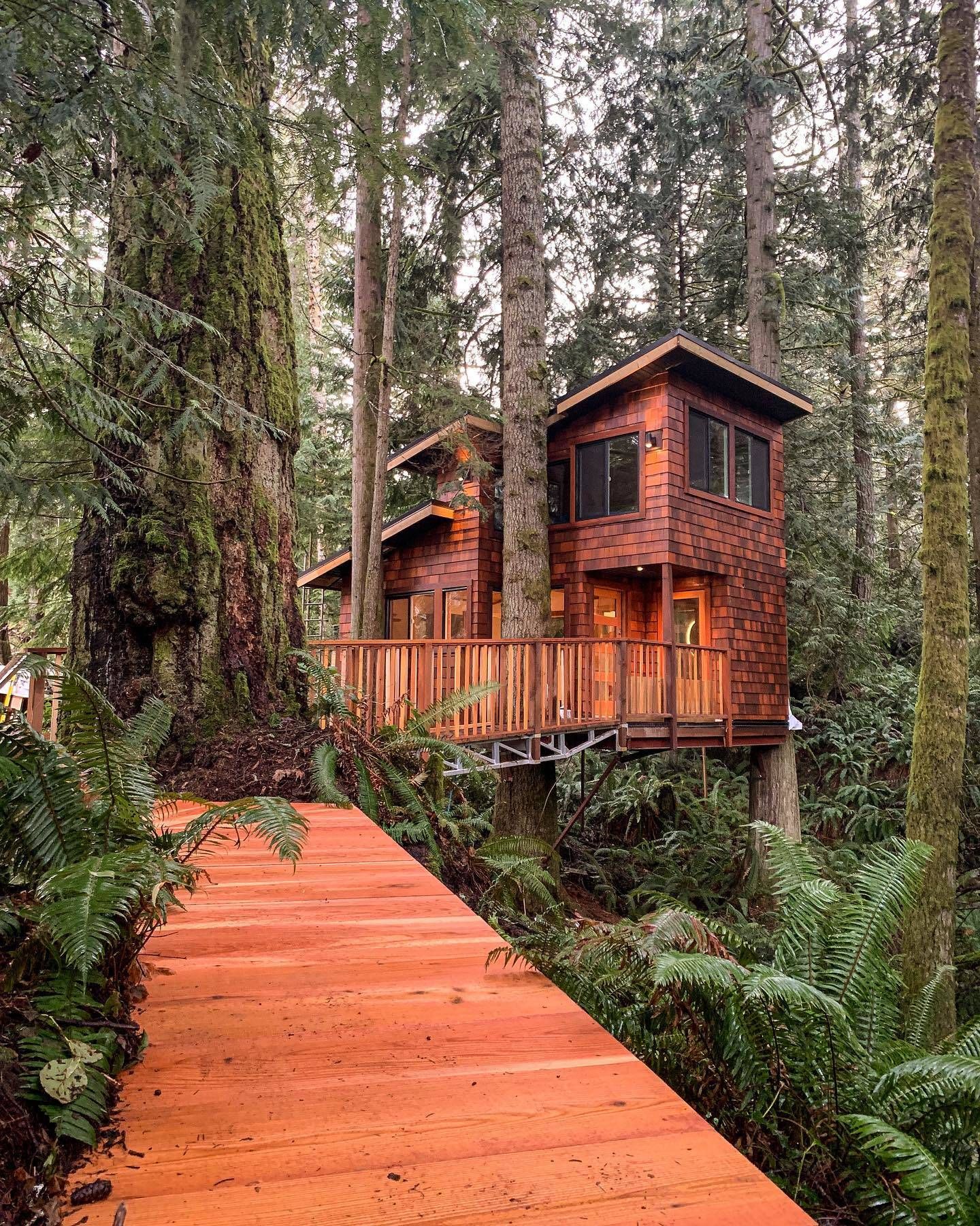 Local carpenter Tyler Bohn embarked on a quest to create the East Sooke Treehouse, after seeing people build similar structures on a Discovery Channel show. (East Sooke Treehouse Facebook photo)