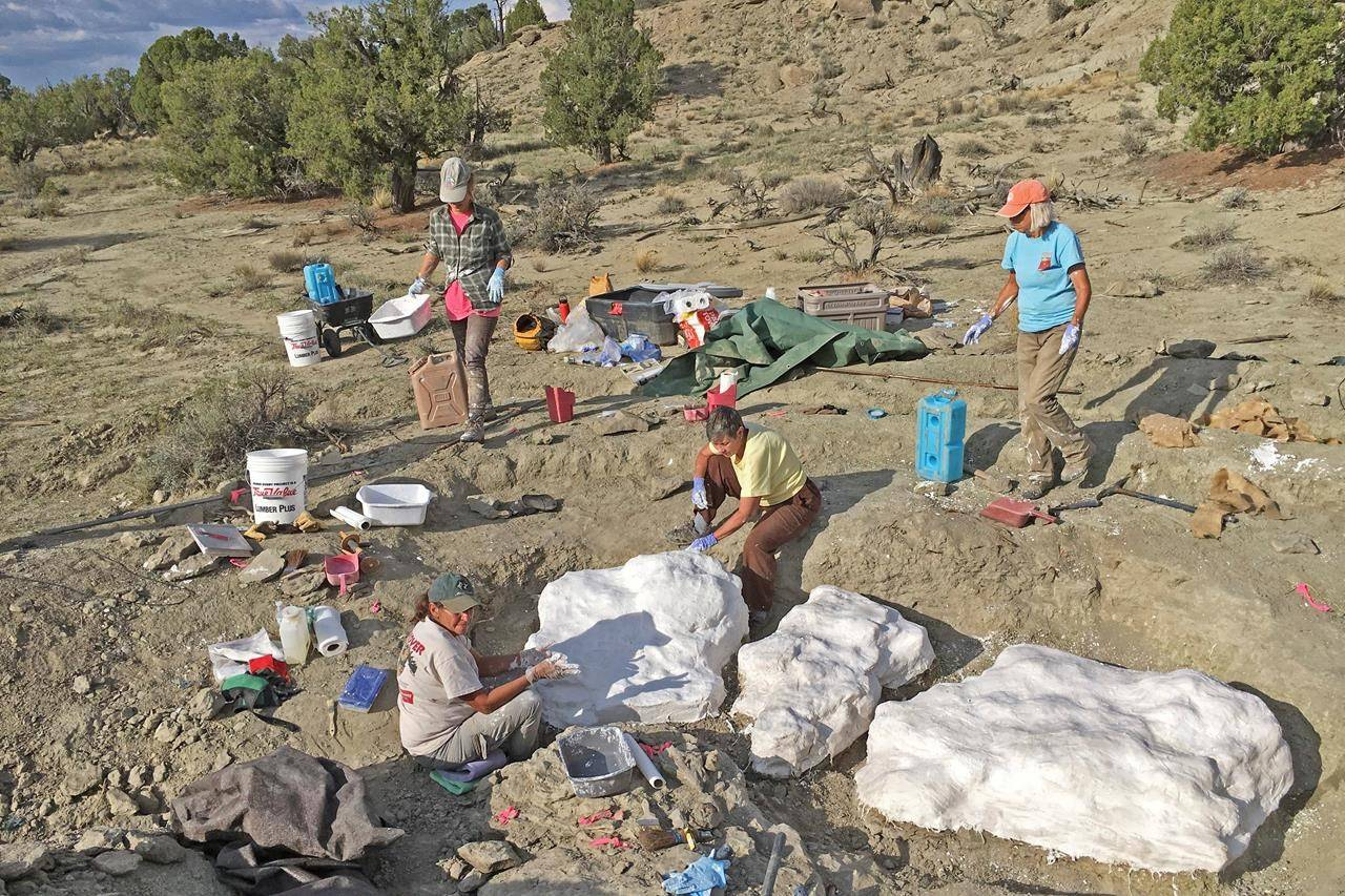 In this photo provided by the Bureau of Land Management, researchers prepare fossils to be airlifted from the Rainbows and Unicorns Quarry on Grand Staircase-Escalante National Monument to the Paria River District paleontology lab in Kanab, Utah, on Sept. 4, 2018. Ferocious tyrannosaur dinosaurs may not have been solitary predators as long envisioned, but more like social carnivores such as wolves, new research unveiled Monday, April 19, 2021, found. (Dr. Alan Titus/Bureau of Land Management via AP)