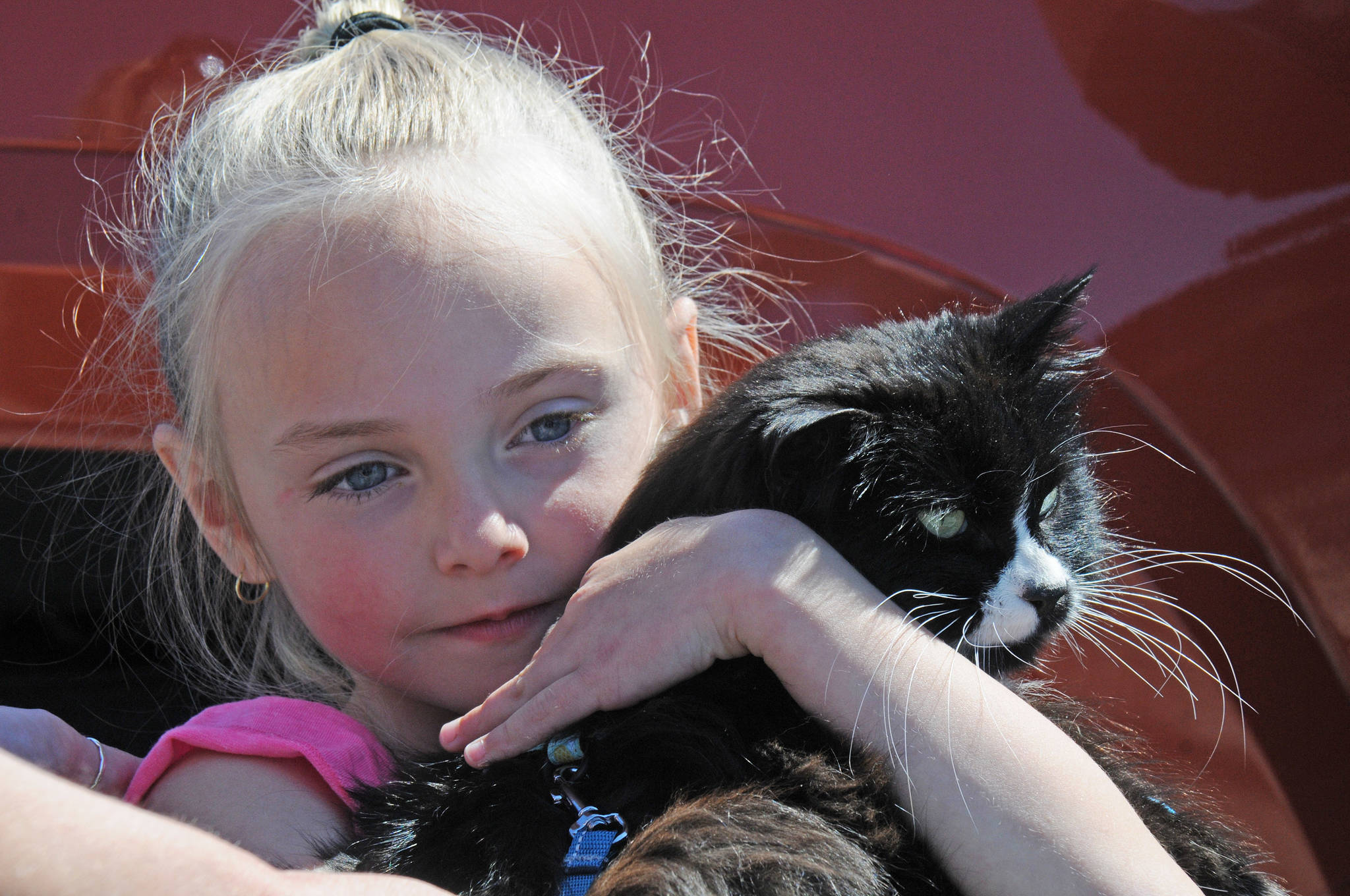 Aria Pendak Jefferson cuddles ChiChi, the family cat that ran away two years ago in Ucluelet. The feline was missing until Courtney Johnson and Barry Edge discovered her in the parking lot of the Canadian Princess earlier this month. Aria and her parents were reunited with ChiChi in a parking lot in Port Alberni. (SUSAN QUINN/ Alberni Valley News)