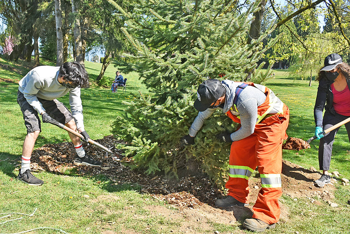 Ethan Andrews (left) and his aunt Shihana Wewala were two of the volunteers planting trees with Pitt Meadows parks workers in Bonson Park. (Neil Corbett/The News)