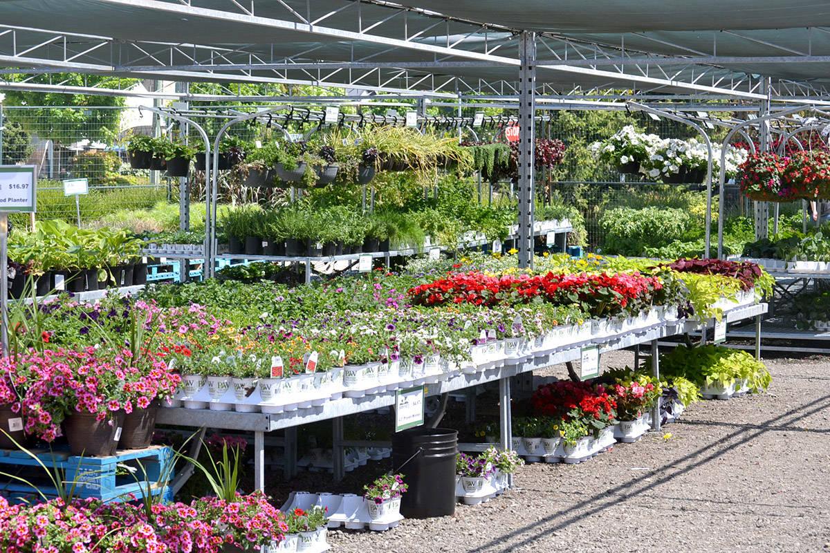 Urban Roots pop-up plant market in Langley, one of seven in the Lower Mainland. (Ryan Uytdewilligen/Aldergrove Star)