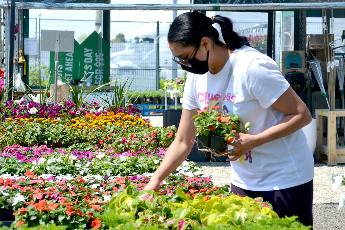 A customer browses Urban Roots pop-up plant market in Langley, one of seven in the Lower Mainland. (Ryan Uytdewilligen/Aldergrove Star)