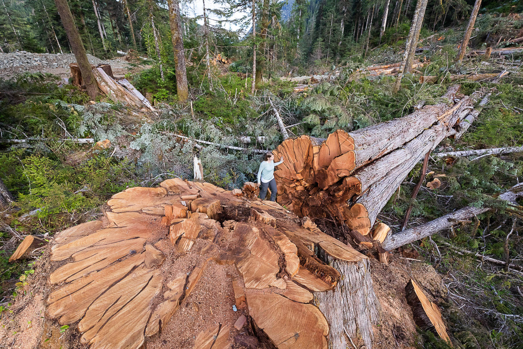 Ancient Forest Alliance campaigner Andrea Inness walks beside an enormous western red cedar stump in a BCTS-issued cutblock in the Nahmint Valley. (PHOTO COURTESY TJ WATT)