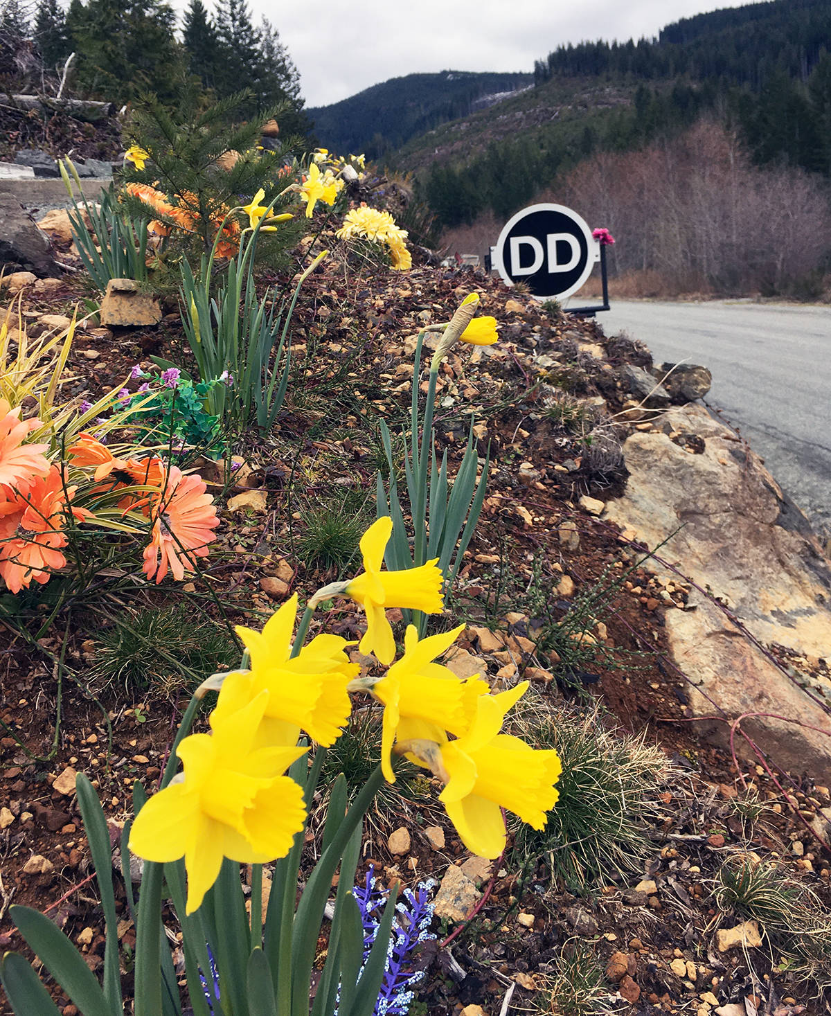The DD Memprial site on the road to Port Renfrew has grown into a great park and garden setting. (Photo submitted)