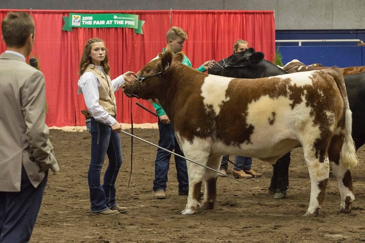 Livestock competitions have been part of the Pacific National Exhibiton for more than a century. (Maple Ridge News files)