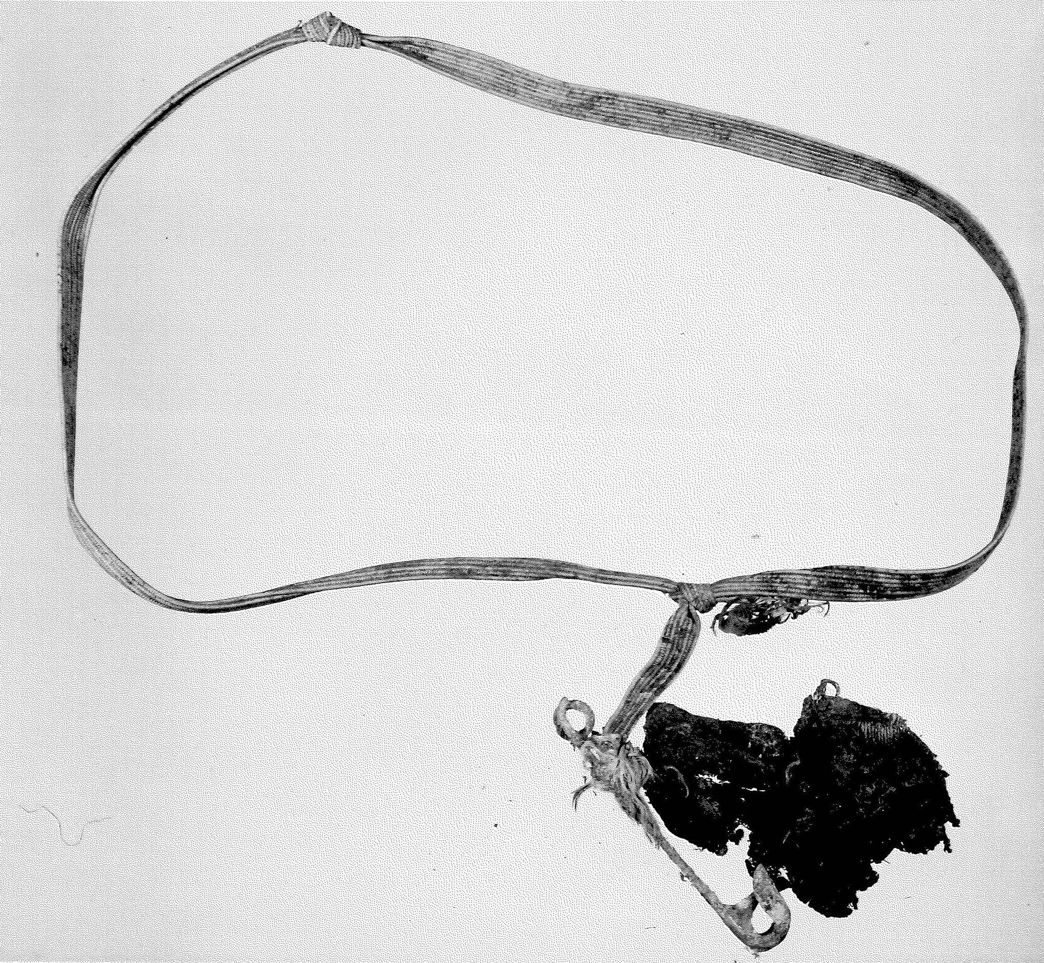 A belt, among other evidence, found at the Stanley Park crime scene in 1953. (Vancouver Police Department)