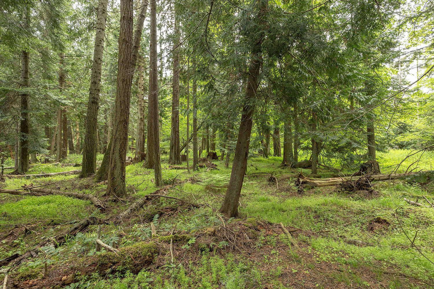 """This picture shows the effects of fallow deer on the forest understory on Sidney Island. The animals eat in the words of one local First Nation """"anything and everything."""" (Parks Canada/Submitted)"""