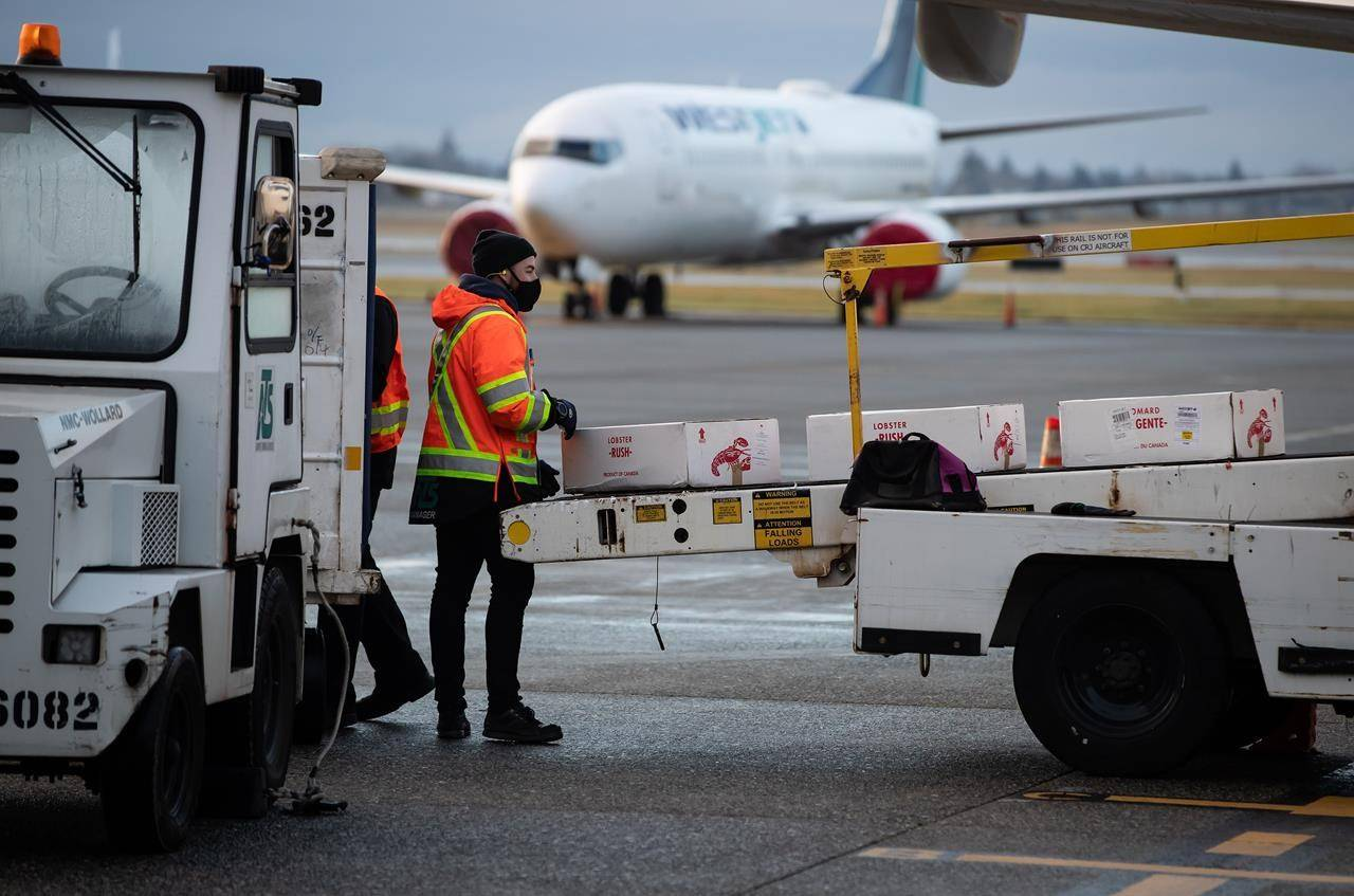 A ground worker wearing a face mask to curb the spread of COVID-19 unloads lobsters from a WestJet Airlines flight at Vancouver International Airport. THE CANADIAN PRESS/Darryl Dyck