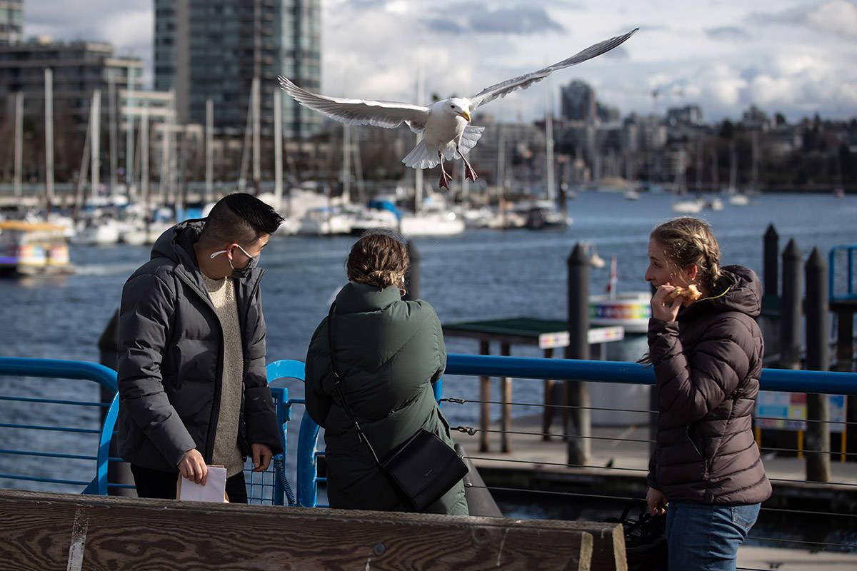 A seagull attempts to take food from a woman on Granville Island, in Vancouver, on Tuesday, February 16, 2021. THE CANADIAN PRESS/Darryl Dyck