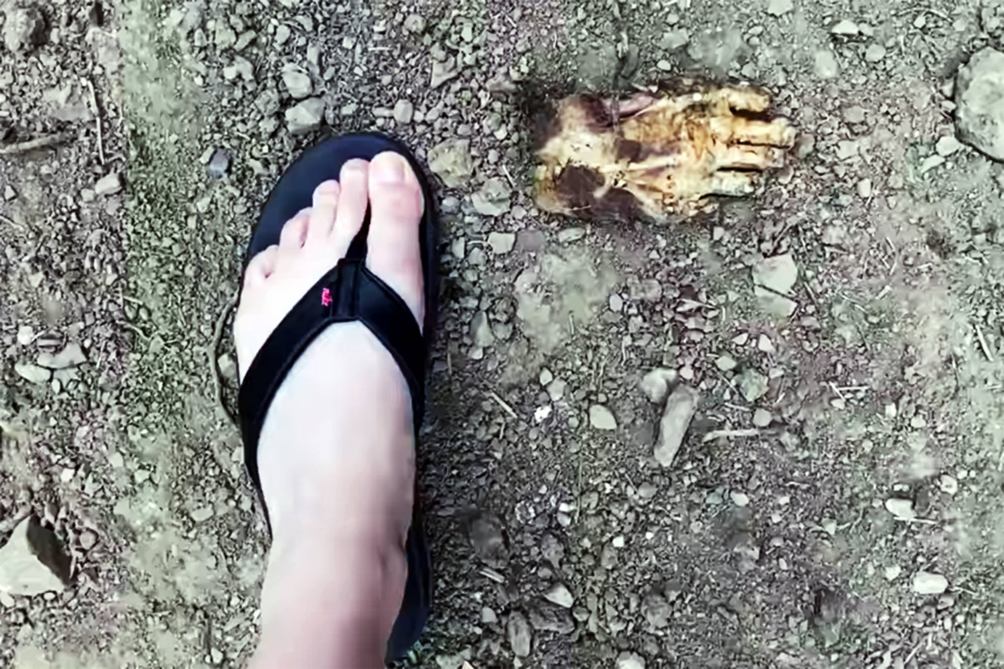 Brandi Hansen said she was disheartened to find dozens of severed, declawed bear paws dumped in a culvert alongside a North Shuswap road on Sunday, May 23, 2021. (Contributed)