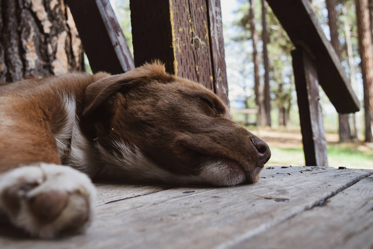 Local veterinary clinics are feeling the pressure brought on by a pandemic-related pet boom, causing a backlog of clients and staff to feel burnt-out. (Corey Bullock/Cranbrook Townsman File)