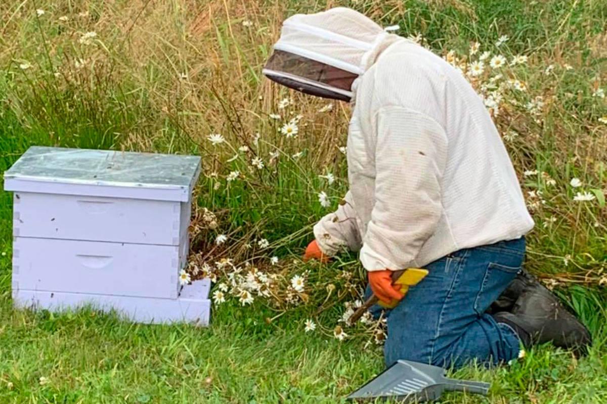 Megan DePew, co-owner of Sequim Bee Farm. (File photo)