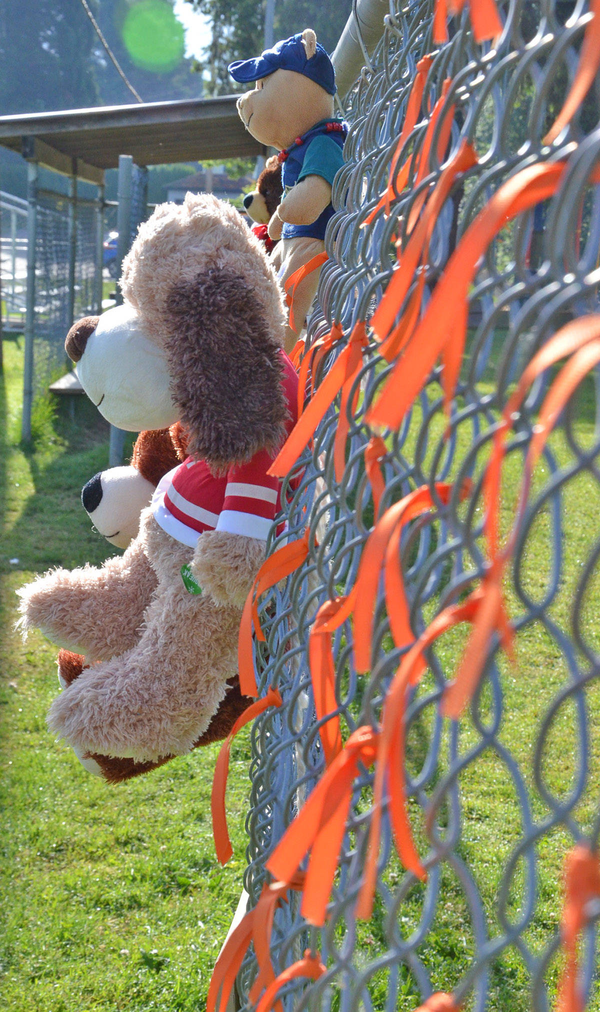 Stuffed toys and orange ribbons were put on a fence at Langley City's Conder Park on the last weekend of May 2021 as a memorial to the 215 dead children at the Kamloops residential school. (Heather Colpitts/Langley Advance Times)