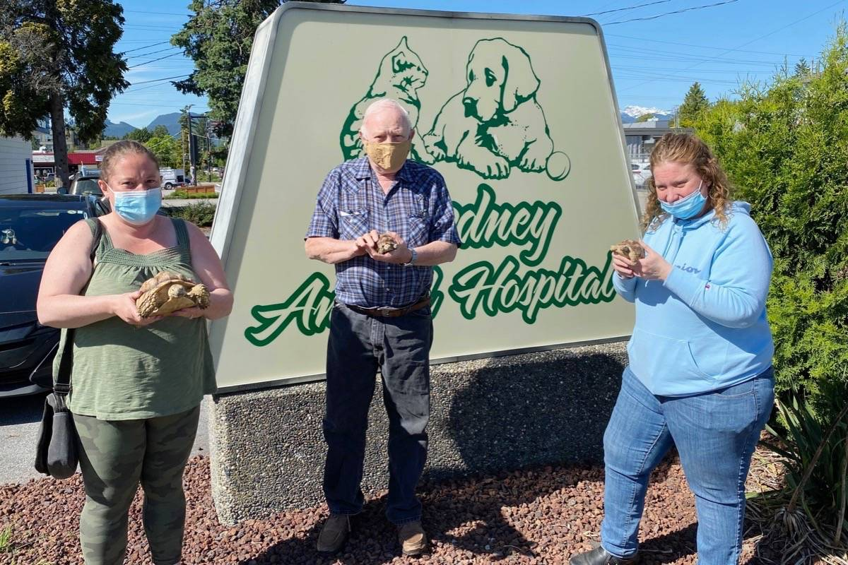 The owners of three African spur-thighed tortoises are reunited with their pets at Dewdney Animal Hospital. (Dr. Adrian Walton/Special to The News)
