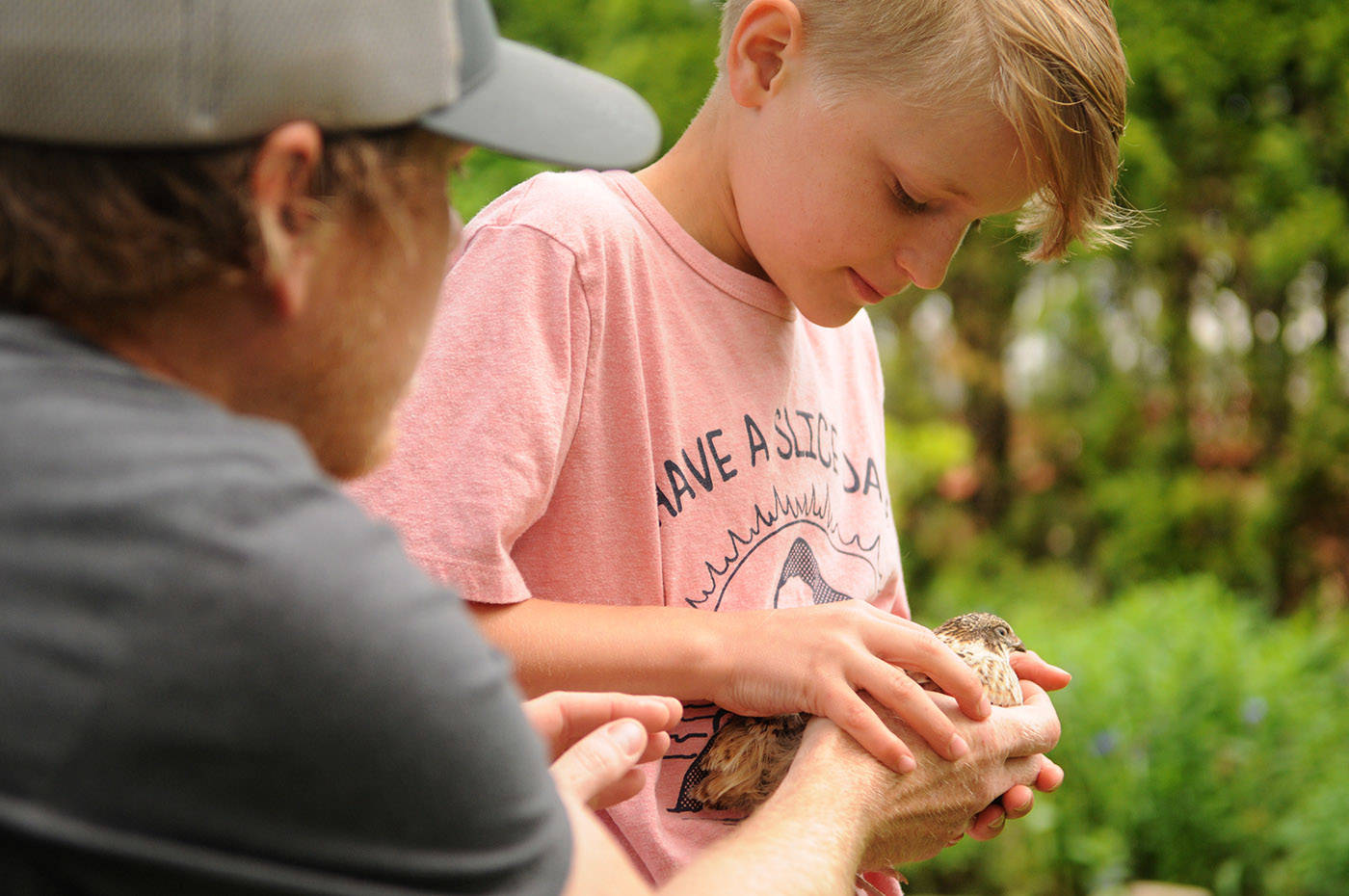 Nick Meredith hands a quail to his 10-year-old son Lukas in their backyard in Chilliwack on Friday, May 28, 2021. The family was ordered to move their backyard quail or face a fine. (Jenna Hauck/ Chilliwack Progress)