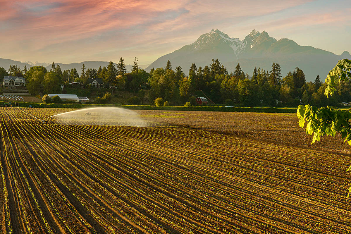 """Lou Fasullo recently snapped this shot from the junction of Rawlison Crescent and 232nd Street, near Fort Langley, where the crops are being irrigated against a beautifully scenic backdrop. """"I thought this captured the essence of Fort Langley, the ruggedness of the mountains, and the bread basket of the Valley,"""" he said in sharing the image. (Special to Langley Advance Times)"""
