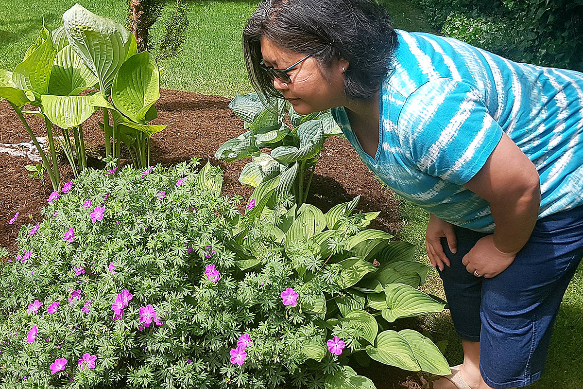 Walnut Grove gardener Valerie Low looking at the Phoebe Noble geranium. (Pam Erikson/Special to Langley Advance Times)
