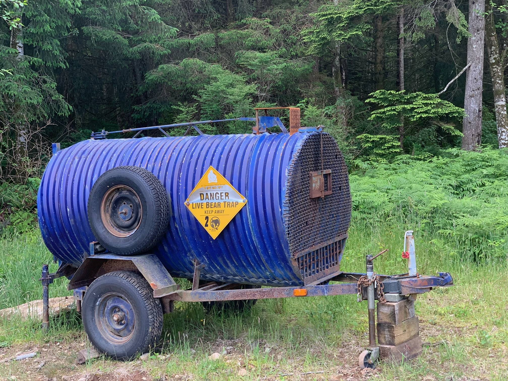 The B.C. Conservation Officer Service set up a live trap on Ben McGuffie's property on Quadra Island. Photo courtesy Ben McGuffie