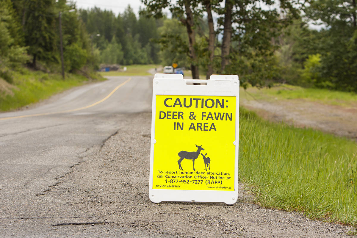 A person wound up in the hospital after an aggressive deer attacked them while walking their dog. Paul Rodgers file.