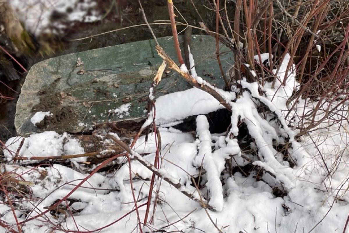 The jade boulder where it was found abandoned in the bush east of Cache Creek after being stolen on Dec. 19, 2020. (Photo credit: Cariboo Jade Shop)