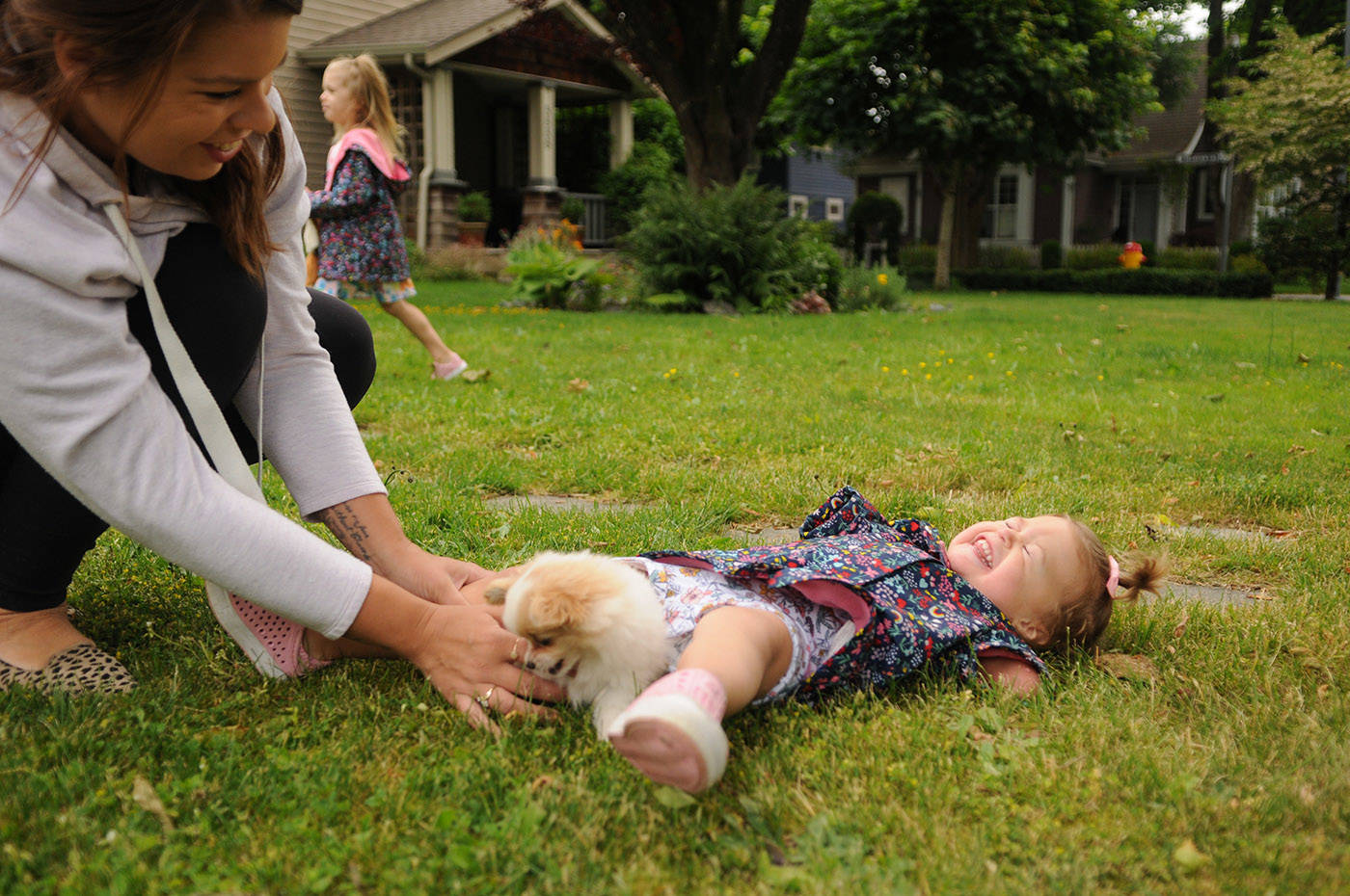 Two-year-old Ivy McLeod falls over from laughing so hard while playing with Lucky the puppy outside their Chilliwack home on Thursday, June 10, 2021. (Jenna Hauck/ Chilliwack Progress)