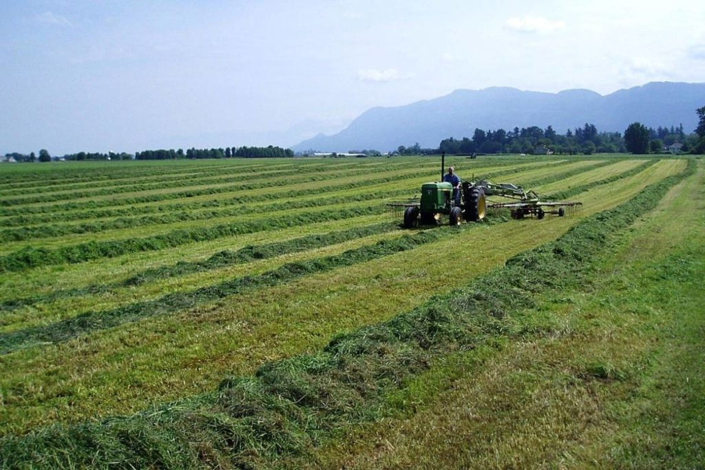 COVID-19: B.C. waives farm income requirement for a second year - Langley Advance Times
