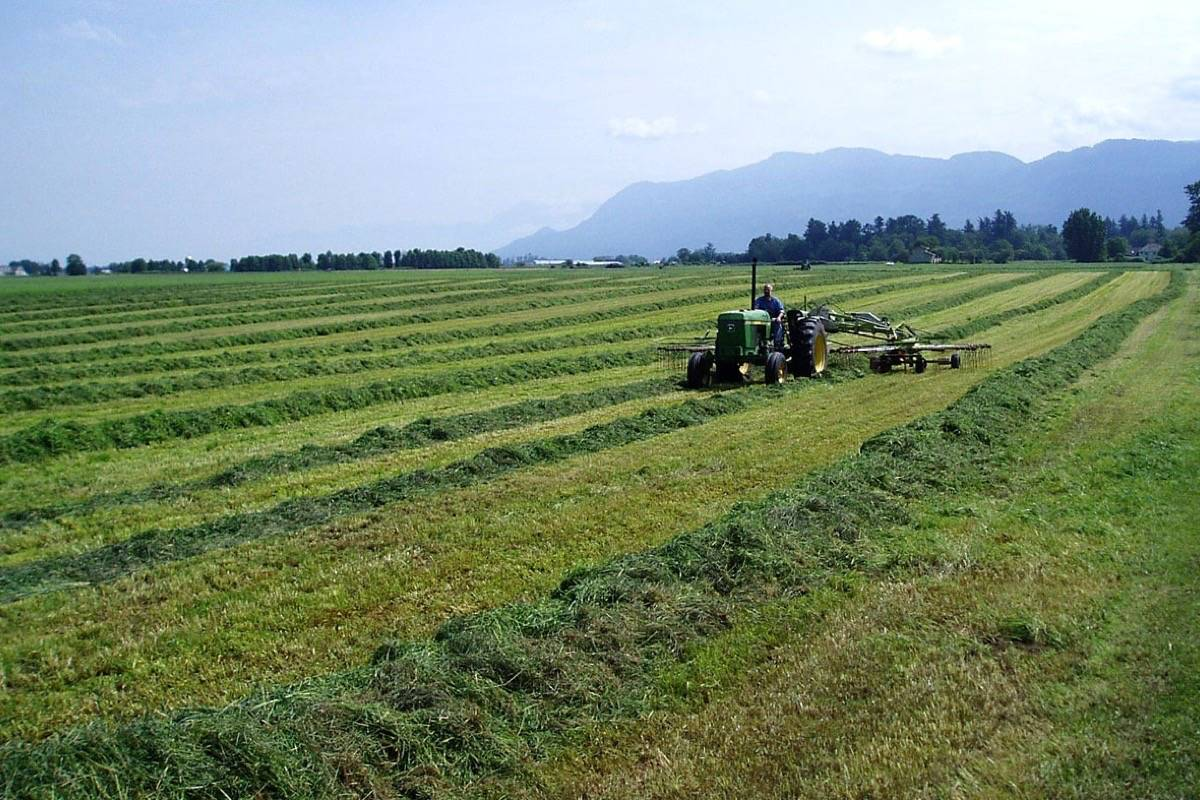 Harvesting hay in the Fraser Valley. (Tom Fletcher/Black Press)