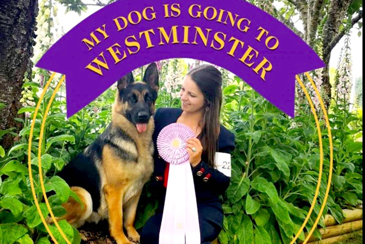 Bella Jun claimed the prize for select female dog at the Westminster Dog Show. (Special to The Star)