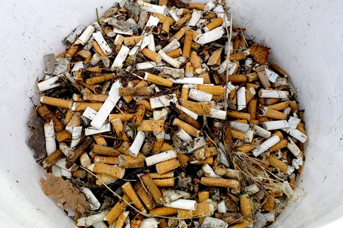 Earth Ninja Jocelyn Titus found 3,300 cigarette butts in downtown Aldergrove last weekend. (Special to The Star)
