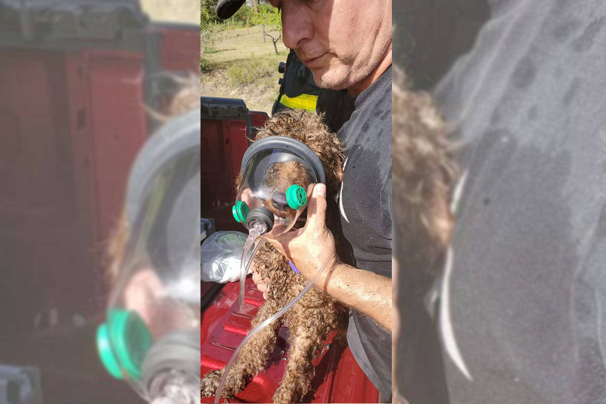Lake Country firefighters made good use of pet respirators they keep on board June 17, 2021. (District of Lake Country)