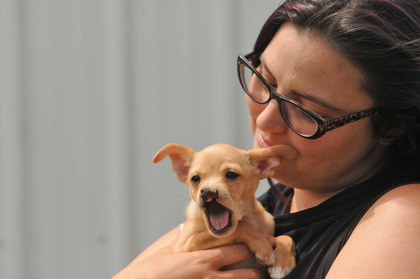 Baby Snoot is a chihuahua cross who was born with a cleft palate. He is seen here with Chilliwack SPCA branch manager Chloé MacBeth at the shelter on Thursday, June 3, 2021. (Jenna Hauck/ Chilliwack Progress)