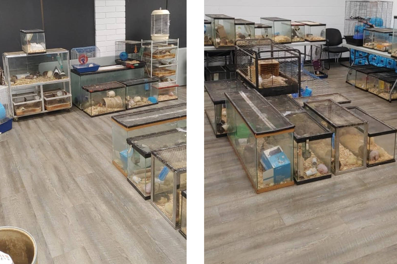 Relocated animals from the Reptile Room are safe for now in an air-conditioned room provided by Brian Goldstone and Griffin Security. (submitted photos)