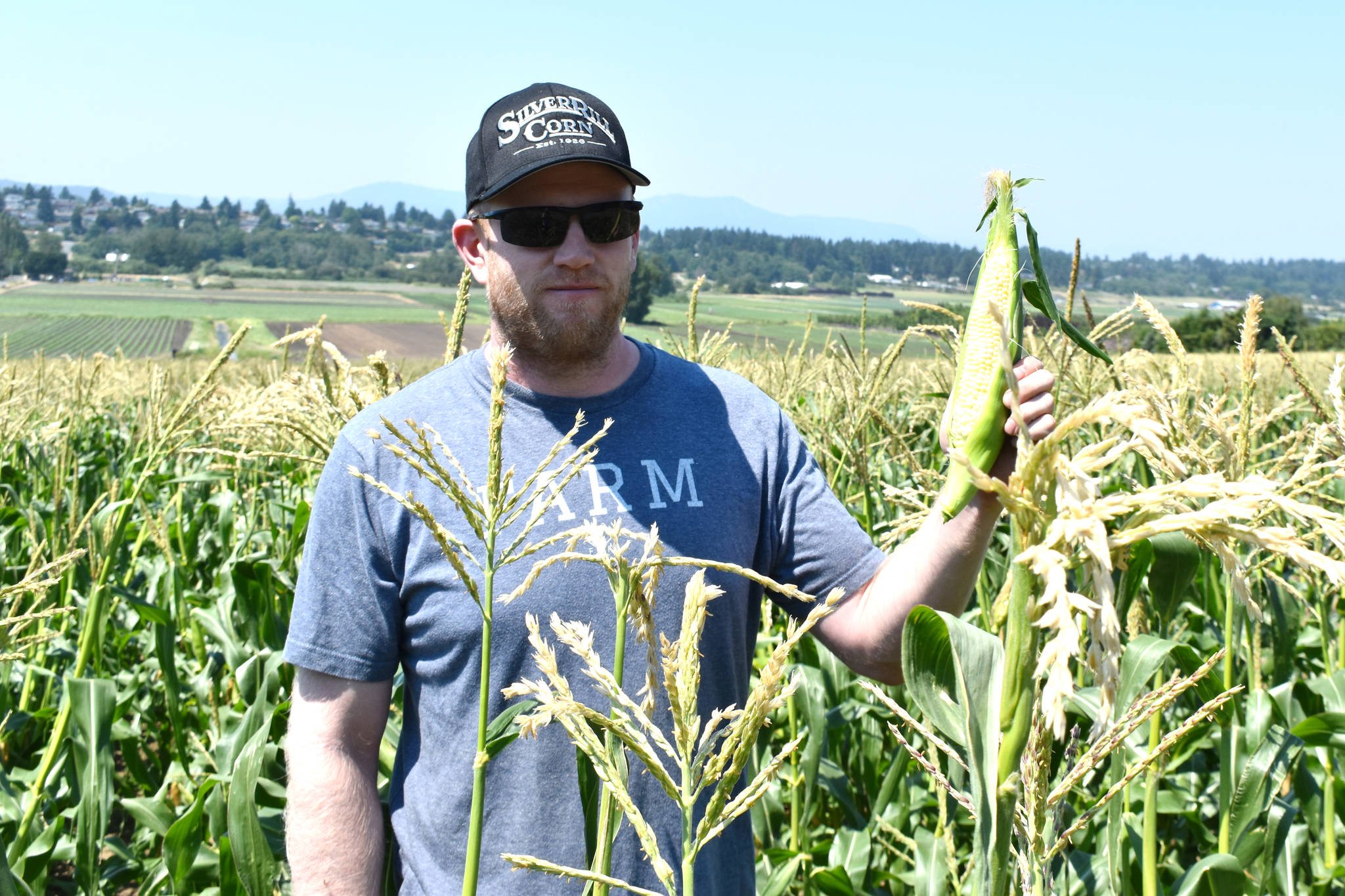 Clayton Fox of Silver Rill Corn outside Victoria shows off a cob of corn. While the high temperatures have damaged the farm's berry patch, it has helped its corn. (Wolf Depner/News Staff)