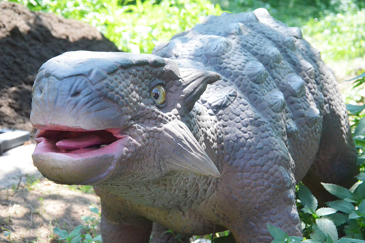 This baby Ankylosaurus is a dinosaur that's part of the new Mesozoic Adventure at the Greater Vancouver Zoo. (Matthew Claxton/Black Press Media)