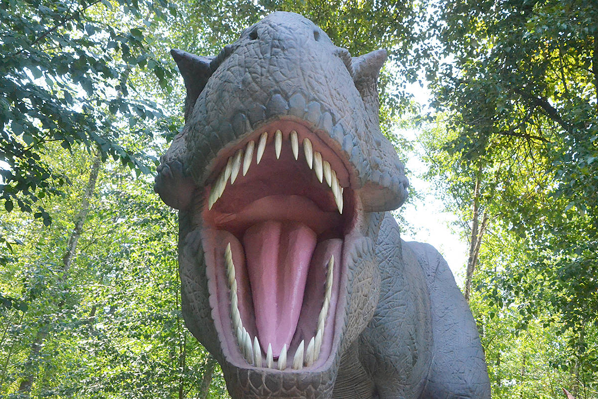 A T-Rex is a dinosaur that's part of the new Mesozoic Adventure at the Greater Vancouver Zoo. (Matthew Claxton/Black Press Media)