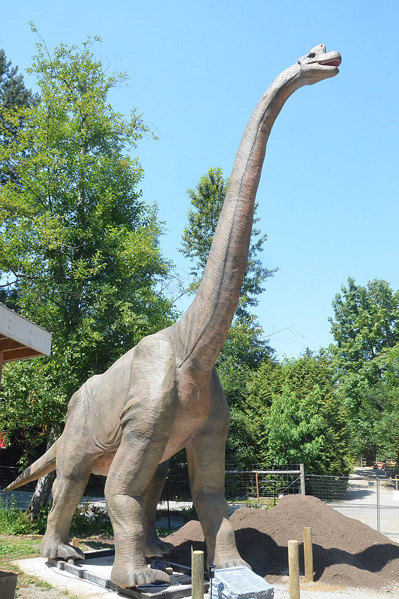 A Brachiosaurus is a dinosaur that's part of the new Mesozoic Adventure at the Greater Vancouver Zoo. (Matthew Claxton/Black Press Media)