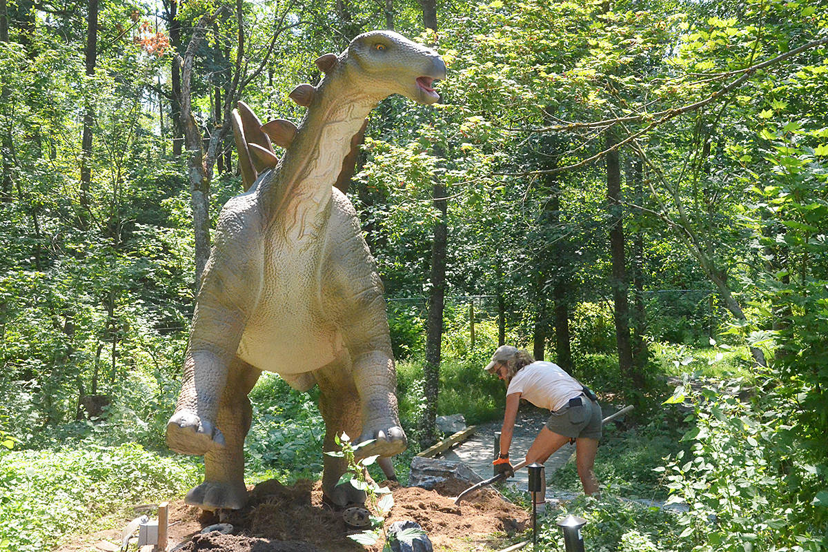 A Stegosaurus is a dinosaur that's part of the new Mesozoic Adventure at the Greater Vancouver Zoo. (Matthew Claxton/Black Press Media)