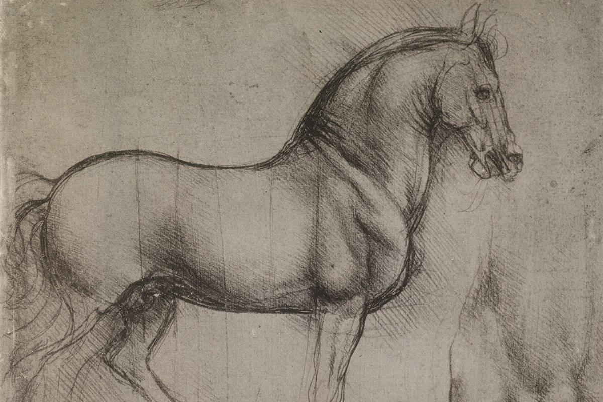 Horse study by da Vinci