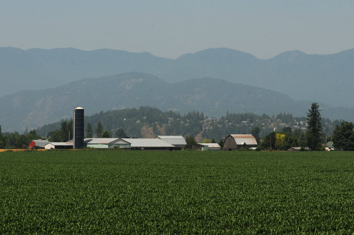 Little Mountain is seen in this view of Chilliwack, looking northwest from Gibson Road on Tuesday, July 6, 2021. (Jenna Hauck/ Chilliwack Progress)