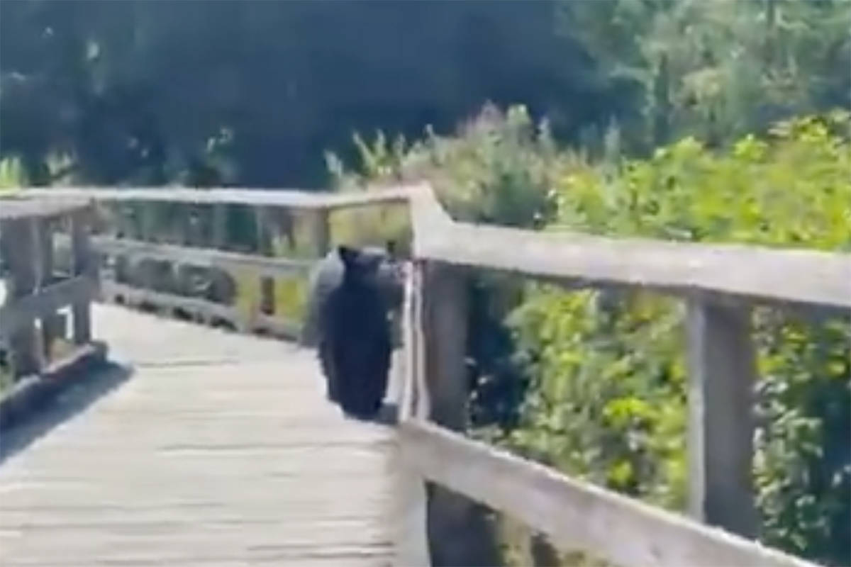A bear showed up as a runner was gearing up for a job at Burnaby Lake Park. (kmwhitter/Twitter)
