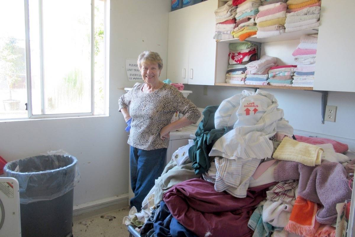 June Young is self-assigned to laundry duty at OWL Rehabilitation Society, where staff and volunteers have been swamped with birds due to the recent heat wave. (Contributed photo)