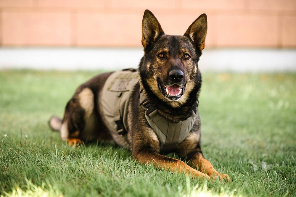 PSD Gator was killed in the line of duty July 8, 2021. Photo by Erin Wallis Photography