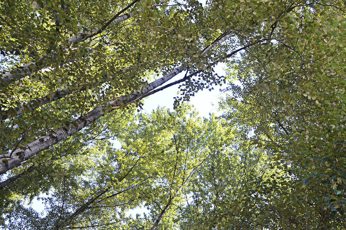 Langley Township council passed a tree protection bylaw in 2019, and is now considering updates. (Black Press Media)